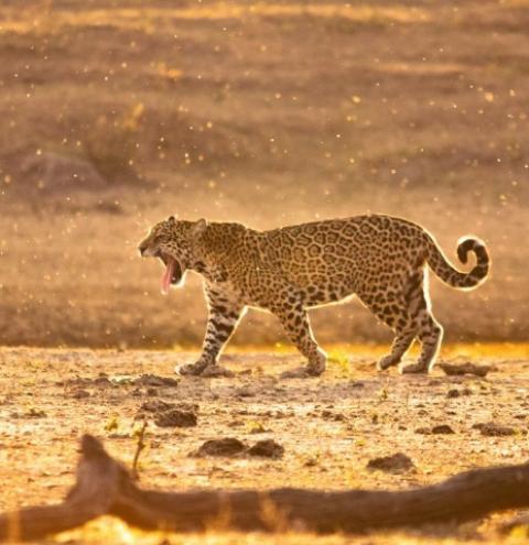 Governo Federal cria programa de resgate da fauna silvestre